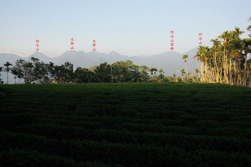 烏來山茶園
