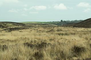20170329-52_Biller Howe Dale Slack (Bog Marsh Moor)