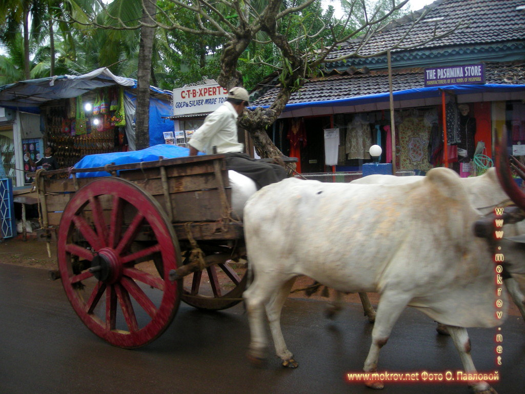 Индия штат Гоа, деревня Кондолим В этом альбоме фотоработы