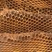 Detail of honey comb with honey bee (Apis mellifera) nest
