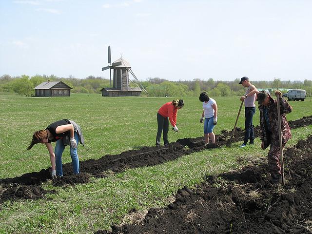 Первый этап посадки деревьев для защиты зданий музея от суховейных ветров и снежных бурь. Май 2017 года