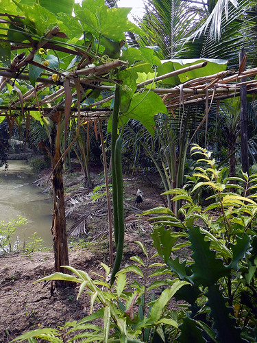 A small garden amidst the jungle vegetation of the Mekong River delta