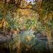 Sunrise at Morris Bridge Park by JDS Fine Art Photography