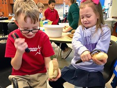 Office for the morning: Watching first-graders at Kenwood Elementary school peel potatoes for tomorrow's Thanksgiving feast is an *extremely* entertaining way to start the week. #NGMedia #chambana #thanksgiving