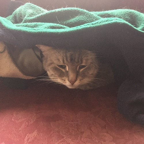 Sleepy cat in cat cave