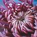 flower by Web-Betty