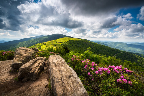 landscape northcarolina nc appalachian trail tennessee tn appalachians mountains outdoors photography southernappalachians adventure nature flowers mountain hiking rhododendron spring summer blueridge nikon d810 zeiss 15mm milvus