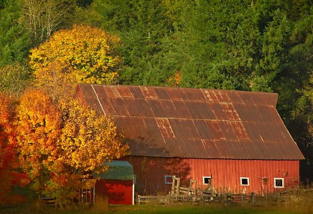 Autumn Barn 4744 B