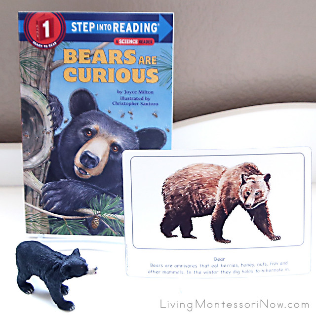 Bear Culture Card with Bears Are Curious Book and Schleich Black Bear