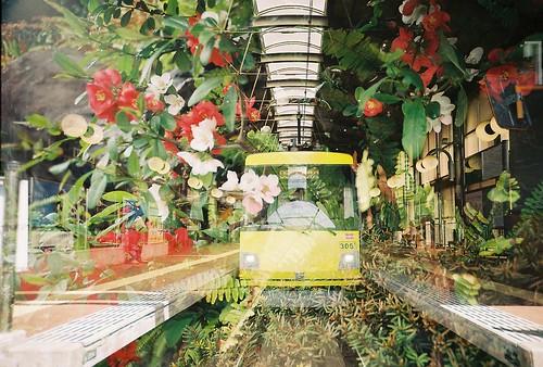 お花と電車