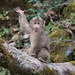 Waving Baby Monkey