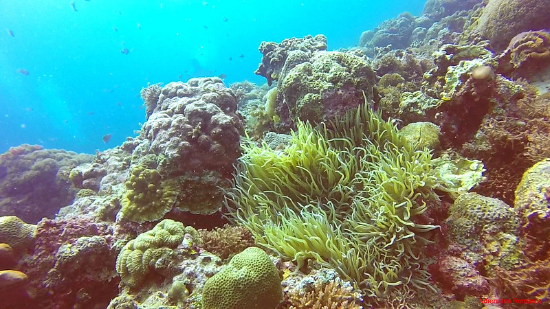 Healthy reefs are beautiful