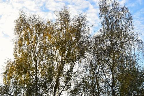 Bäume am Germeringer See