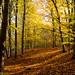 Beechwood autumn