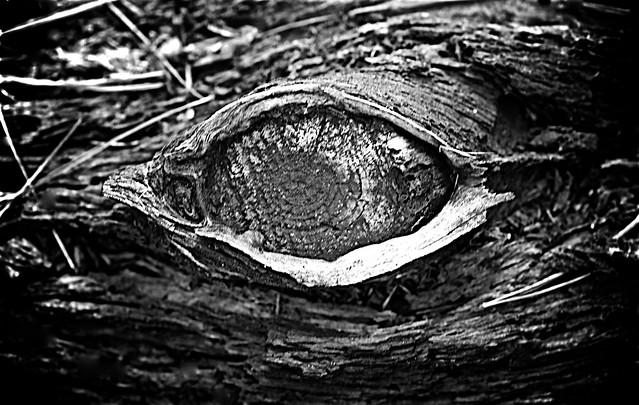 Concord watcher