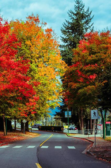 Fall Colors & Empty Road