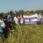 Field Day on Crop Cutting of SCI (Finger Millet) on November 25, 2017