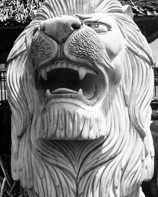 Hear me roar. Day 2 black and white, no peeps.