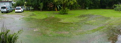 Our Garden with the start of the rainy season ...