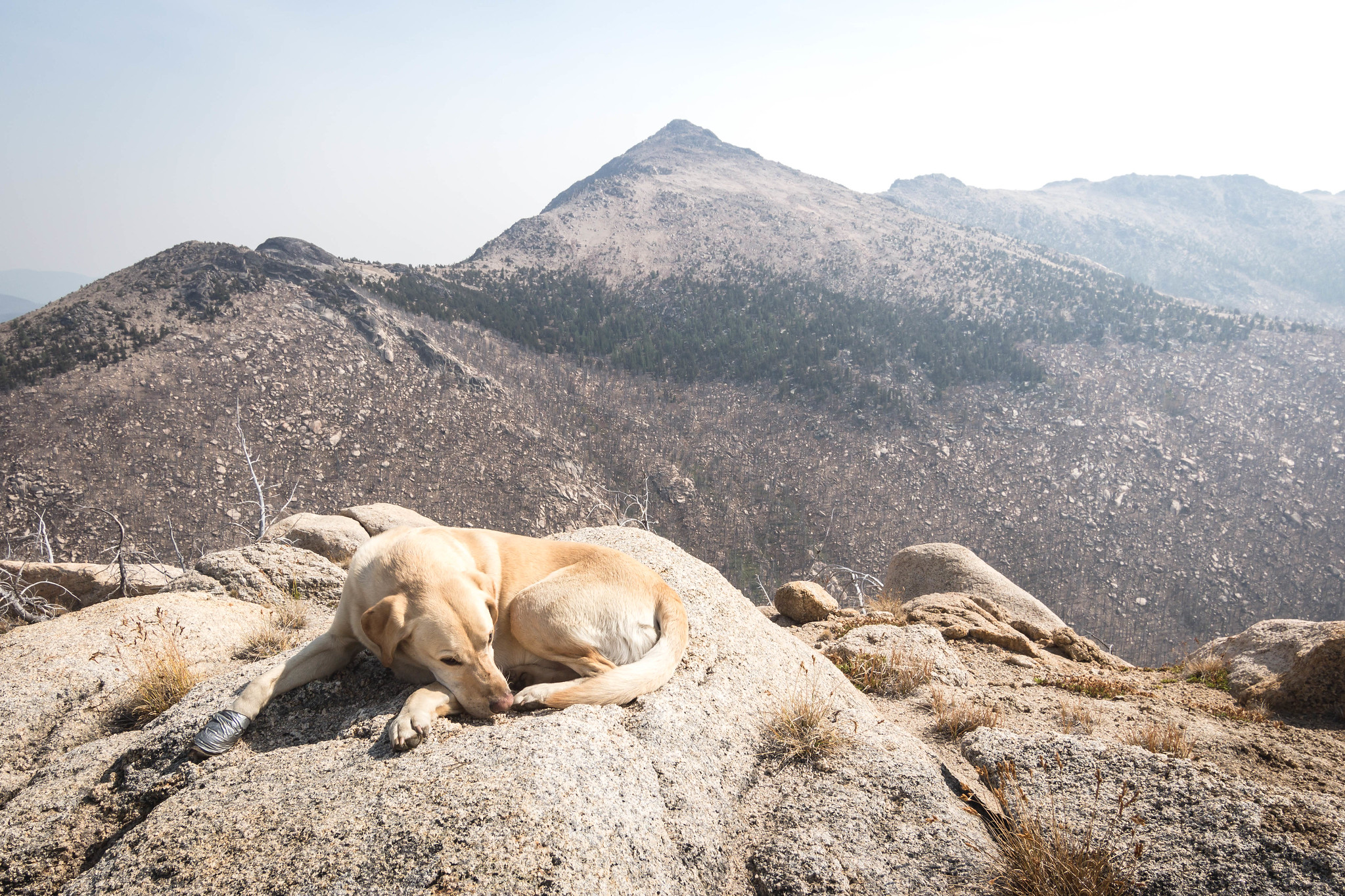Summit dogs on Topaz Mountain