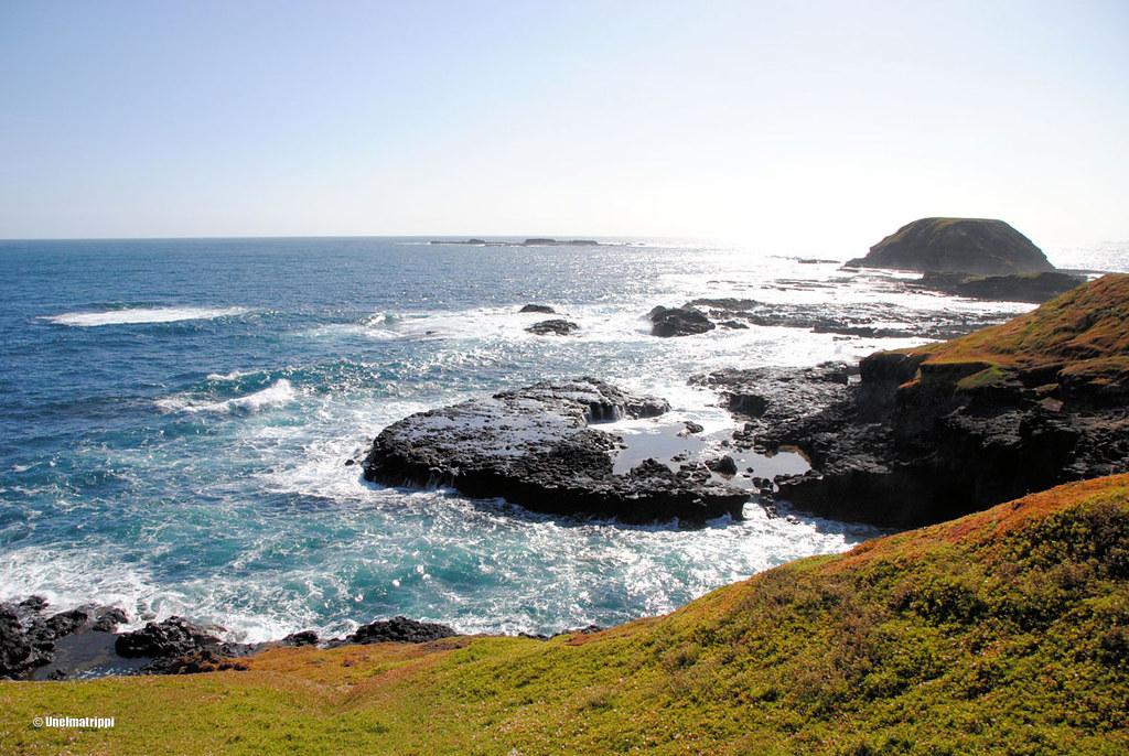 Merimaisema Phillip Islandilla Australiassa
