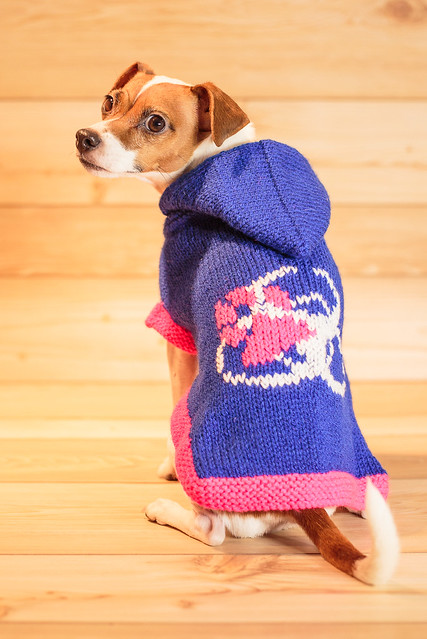 Flyball Christmas Sweater-6931