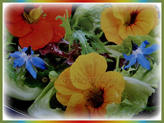 Dish with colourful edible flowers of Tropaeolum majus (Nasturtium, Garden Nasturtium, Indian Cress, Monks Cress), 22 Nov 2017