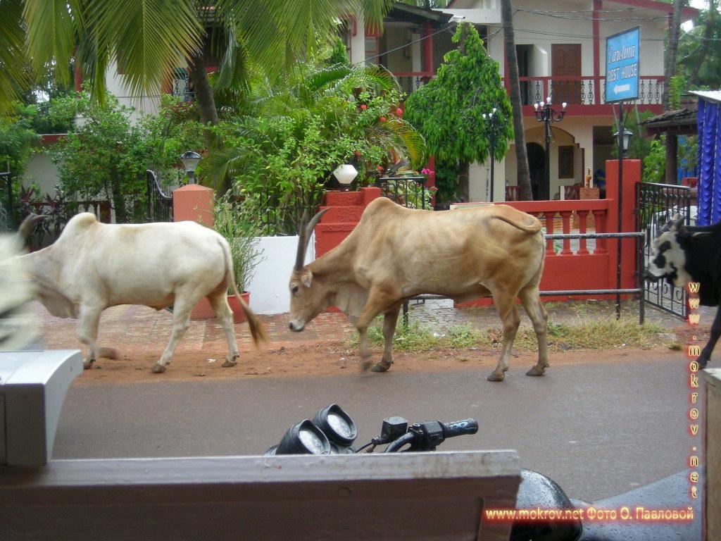 Индия штат Гоа, деревня Кондолим фотопейзажи