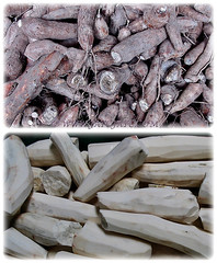 Edible and tuberous roots and flesh of Manihot esculenta (Tapioca, Cassava, Brazilian Arrowroot, Yuca, Ubi Kayu in Malay), 11 Oct 2009