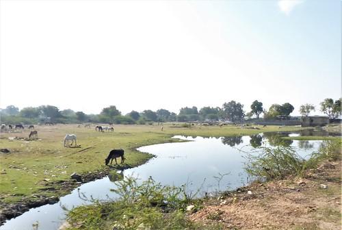 i-Bundi-Pushkar-route (8)
