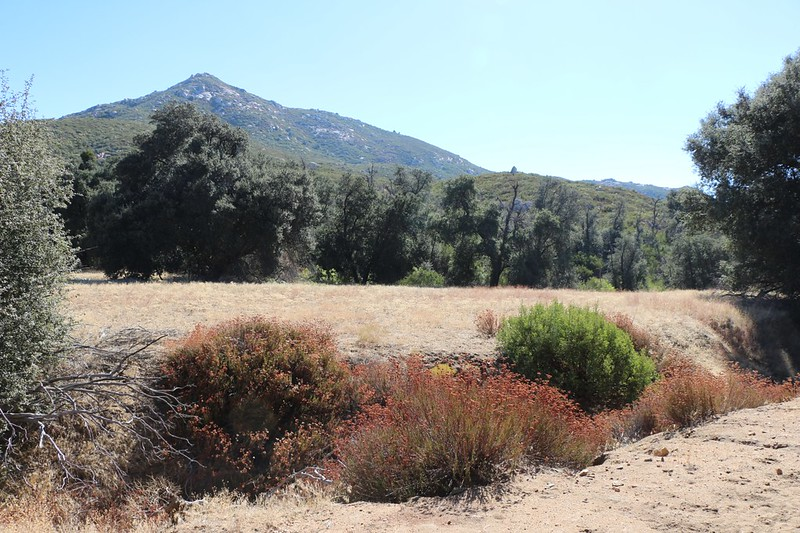 Oakzanita Peak in the distance above a meadow from the East Mesa Fire Road