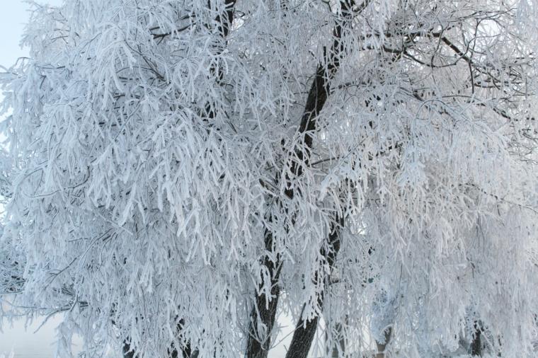 Luminen joulu 2012 4
