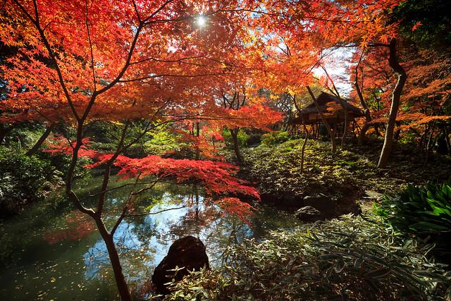 Rikugi-en Garden : Bunkyo, Tokyo, Japan / Japón