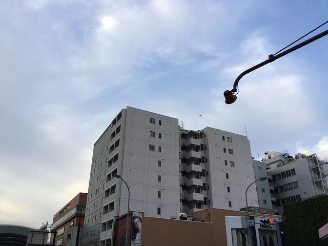 早朝の鳥取市内2 + トンビ