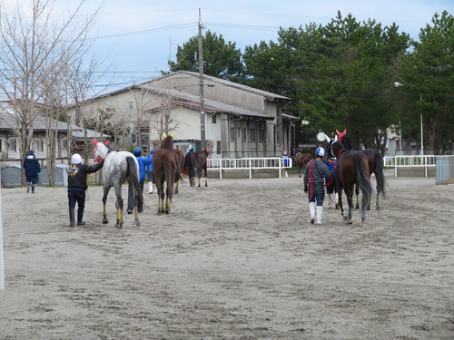 金沢競馬場の厩舎に戻るレース後の馬たち