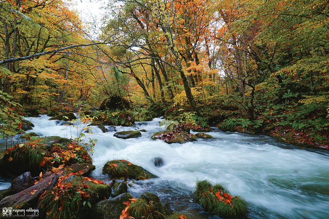 秋色是山巒中的一抹紅 | 12
