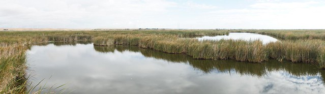 photo of mayberry wetland in the Delta