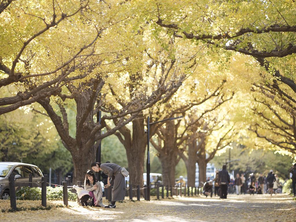神宮外苑銀杏並木⑧