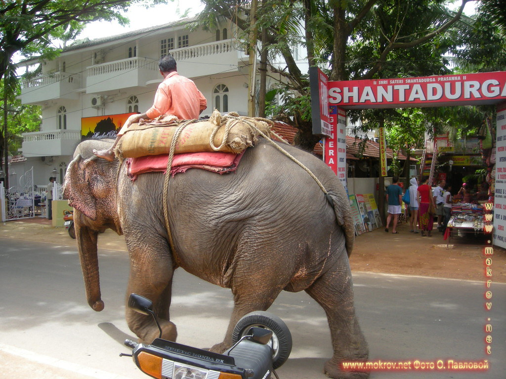 Индия штат Гоа, деревня Кондолим прогулки туристов