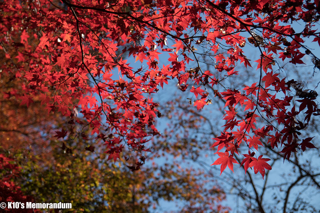IMG_2079東郷公園