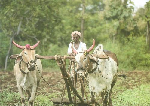 अरण्य फार्म में प्राकृतिप खेती की जाती है