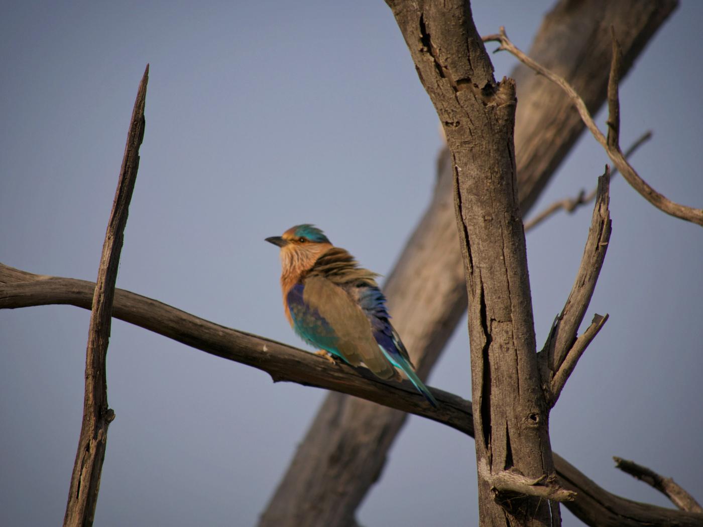 112-India-Ranthambore
