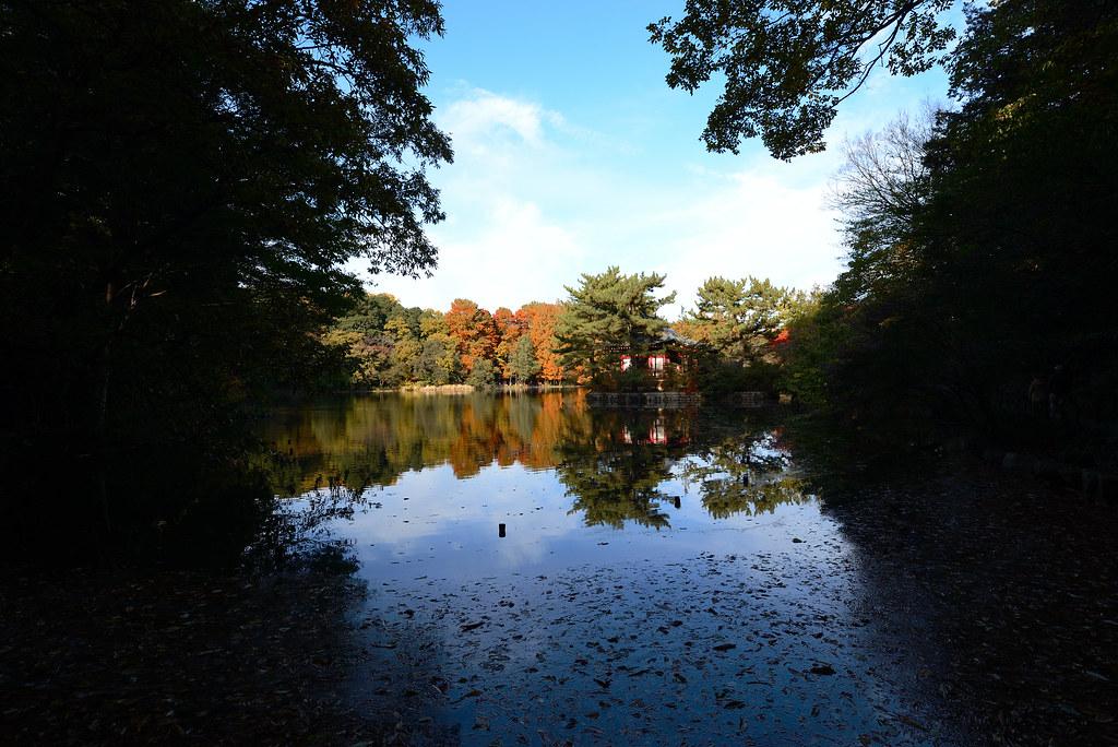 Shakujii park in Autumn. 石神井公園、三宝寺池
