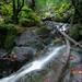Cataract Falls by louisraphael