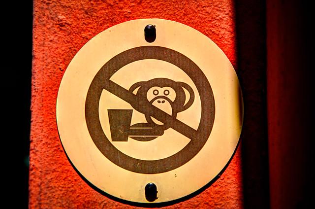 No Monkeys!
