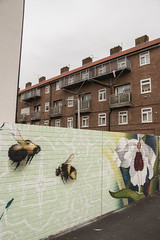 Bees on Craddock St