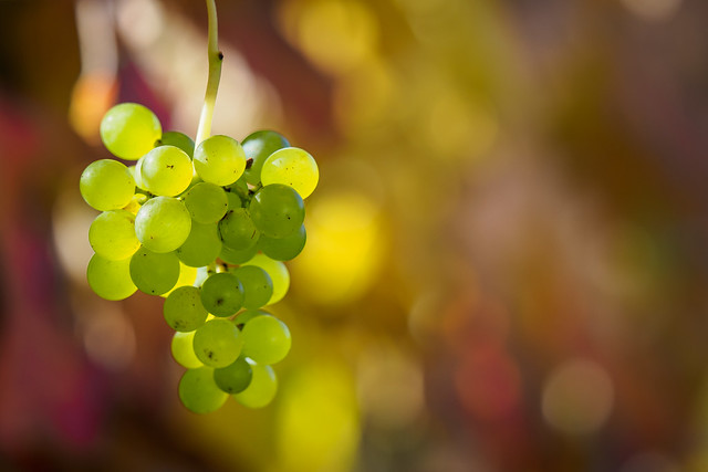 This vine will have smooth bouquet
