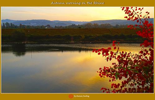 herbst autumn farben colors stimmung morgen morning rheinlandpfalz rhinelandpalatinate deutschland germany landscape