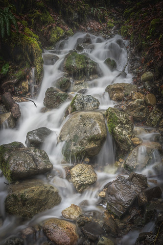 shawniganlake cobblehill cowichanvalley cowichan explorevancouverisland vancouverisland bc britishcolumbia canada water waterfall fern ferns rocks rock rural forest white green winter rain rainforest landscapephotography landscape