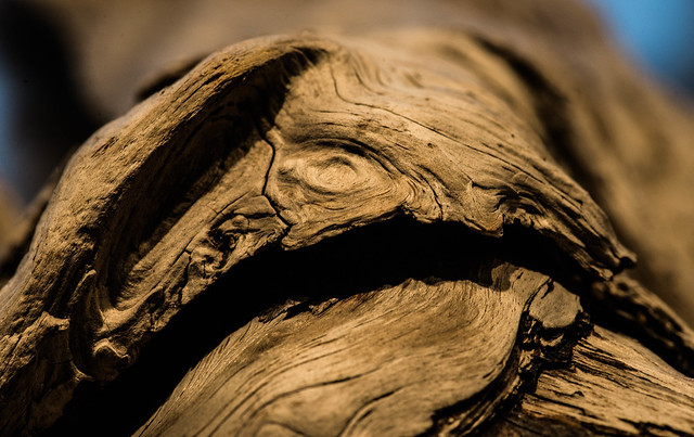 driftwood05